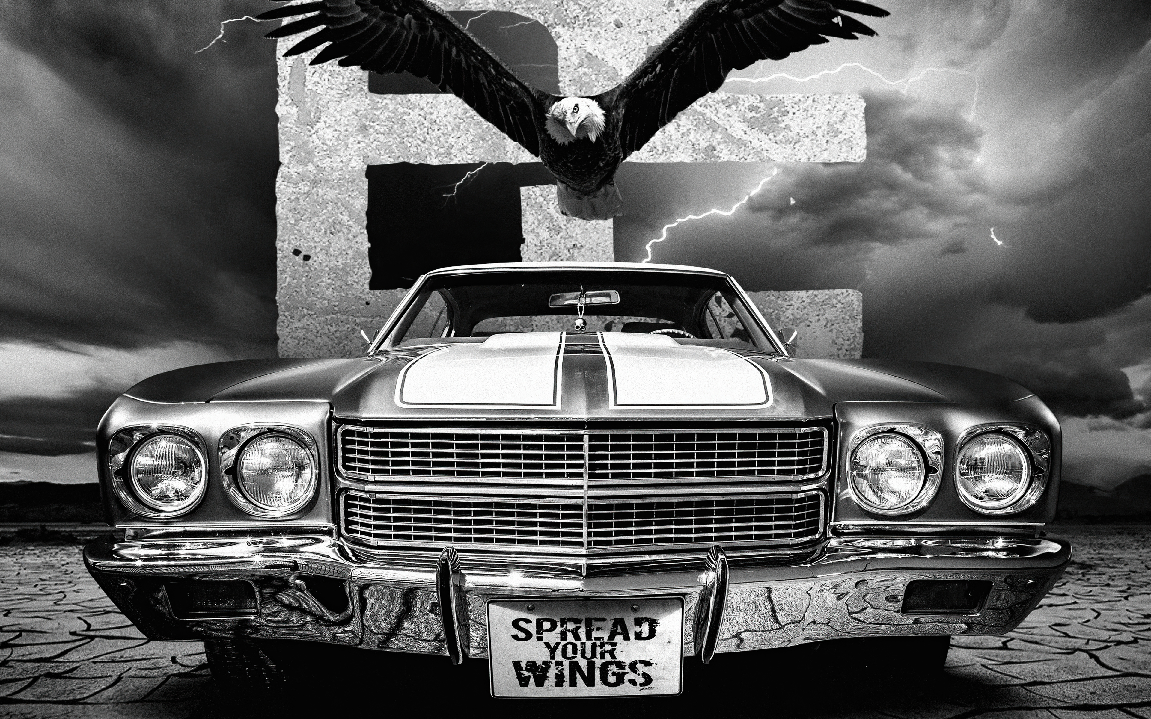 spread-your-wings-jr.jpg