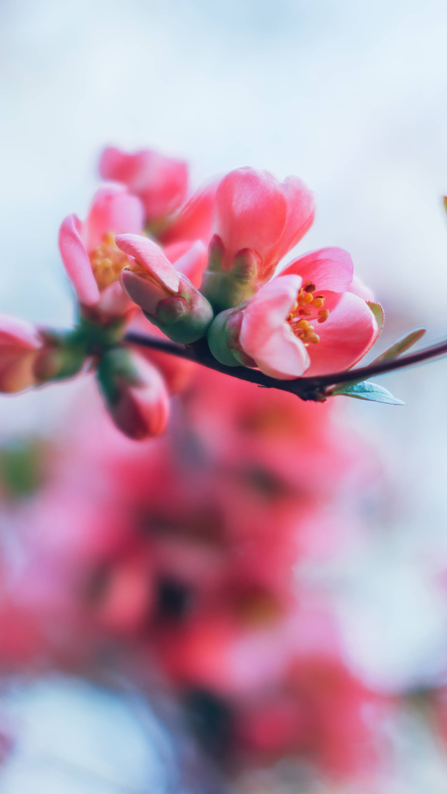 spring-blossom-4k-d3.jpg
