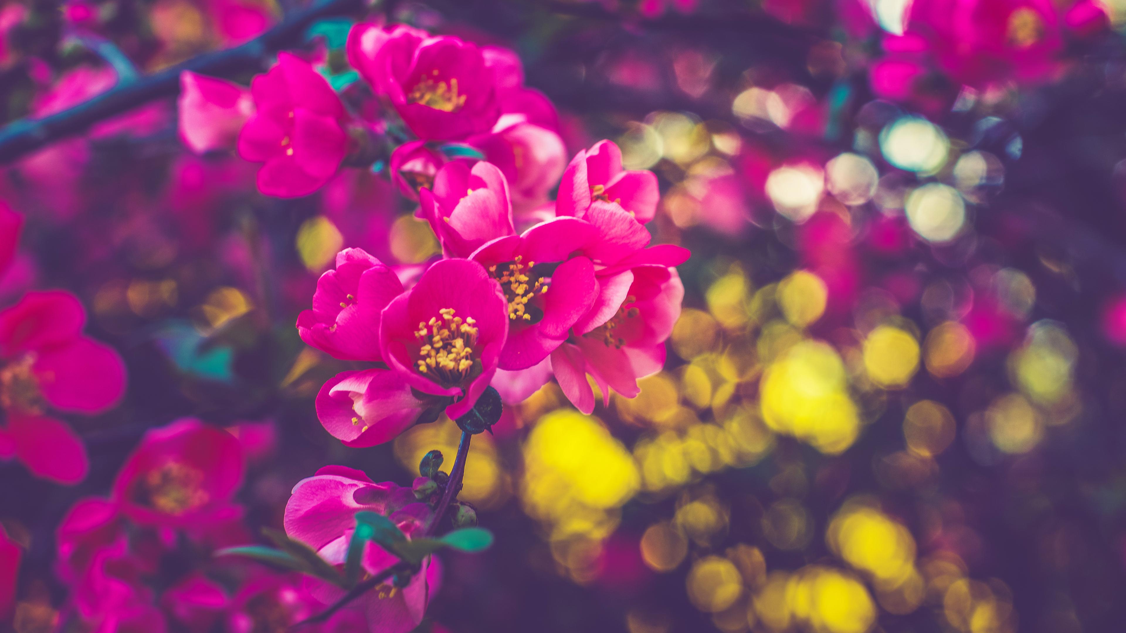 spring-flowers-5k-87.jpg