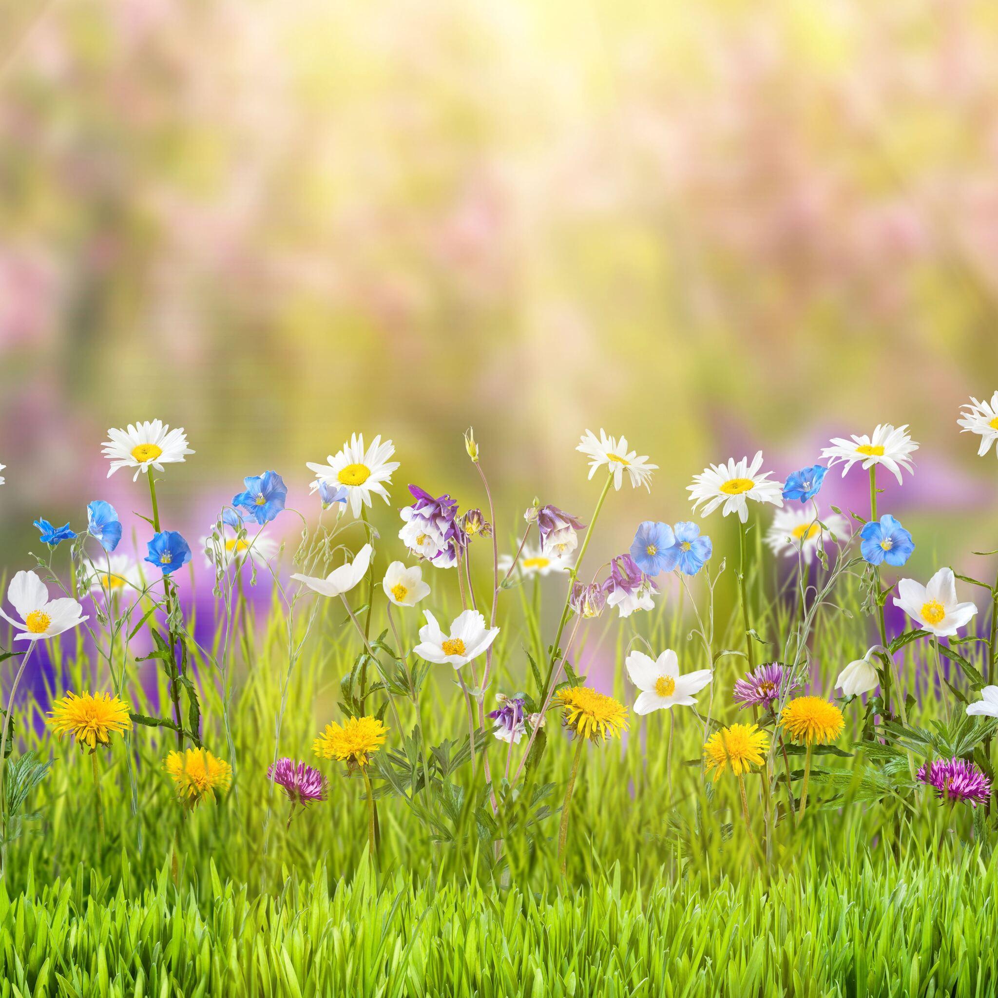 spring-sd.jpg
