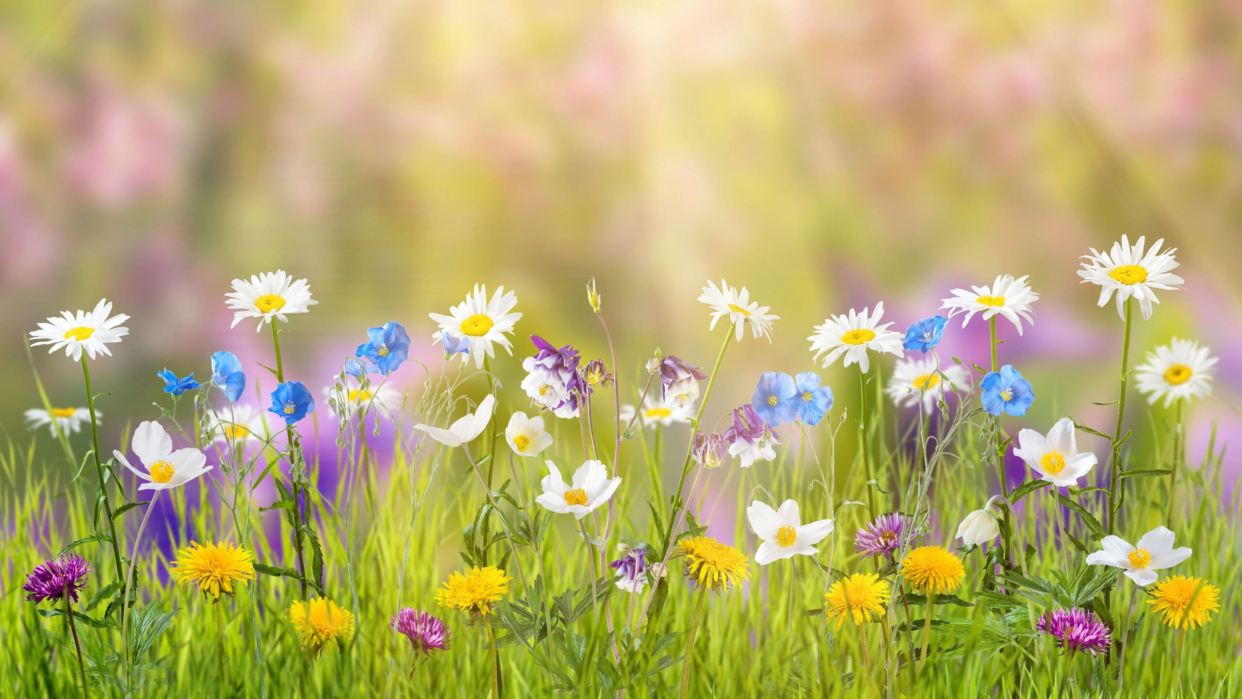 2560x1440 Spring 1440p Resolution Hd 4k Wallpapers Images