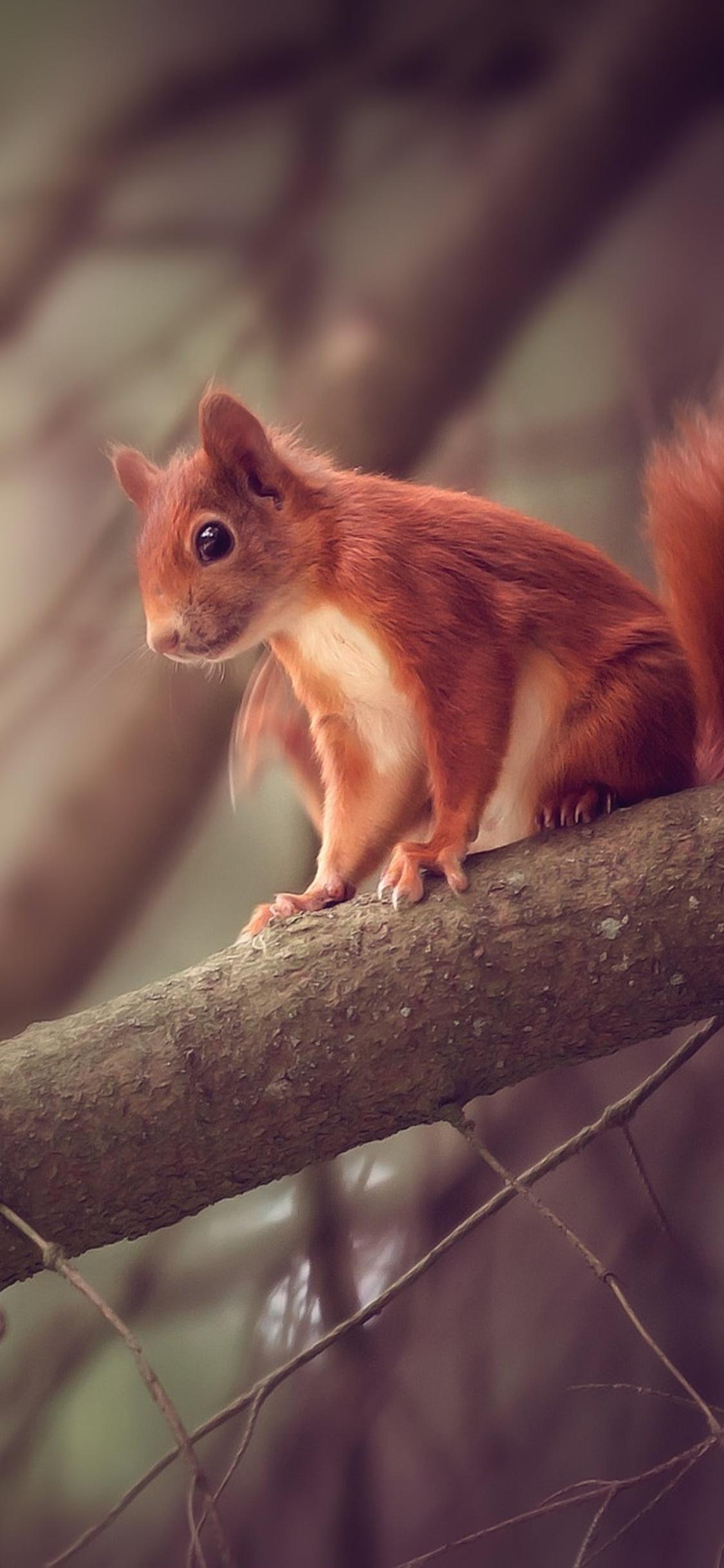 squirrel-sitting-on-branch-yv.jpg