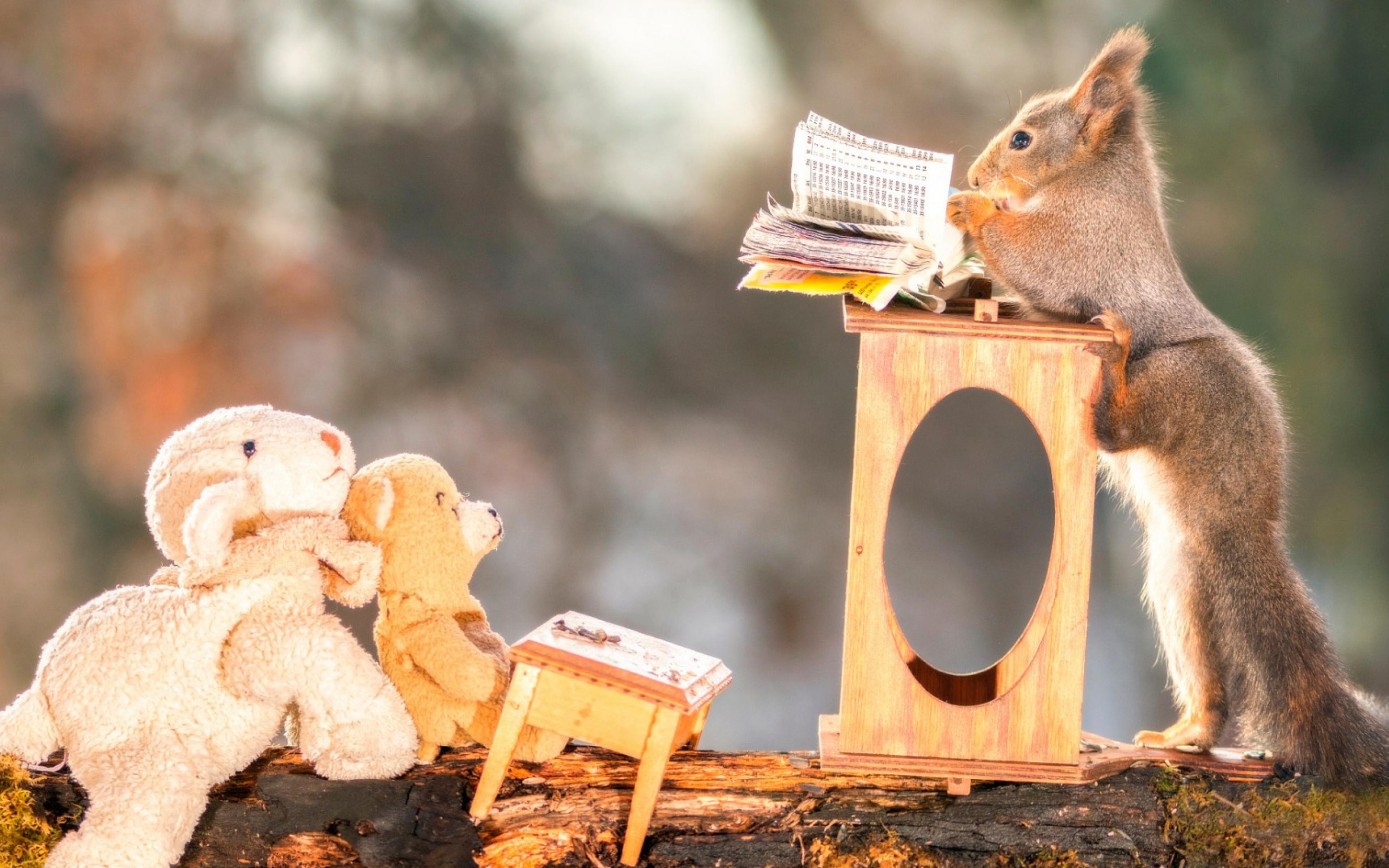 squirrels-funny.jpg