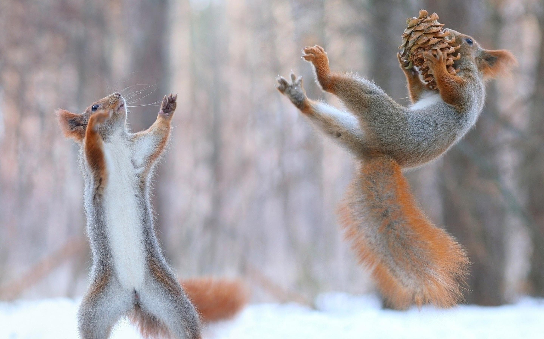 squirrels-having-fun-in-snow.jpg