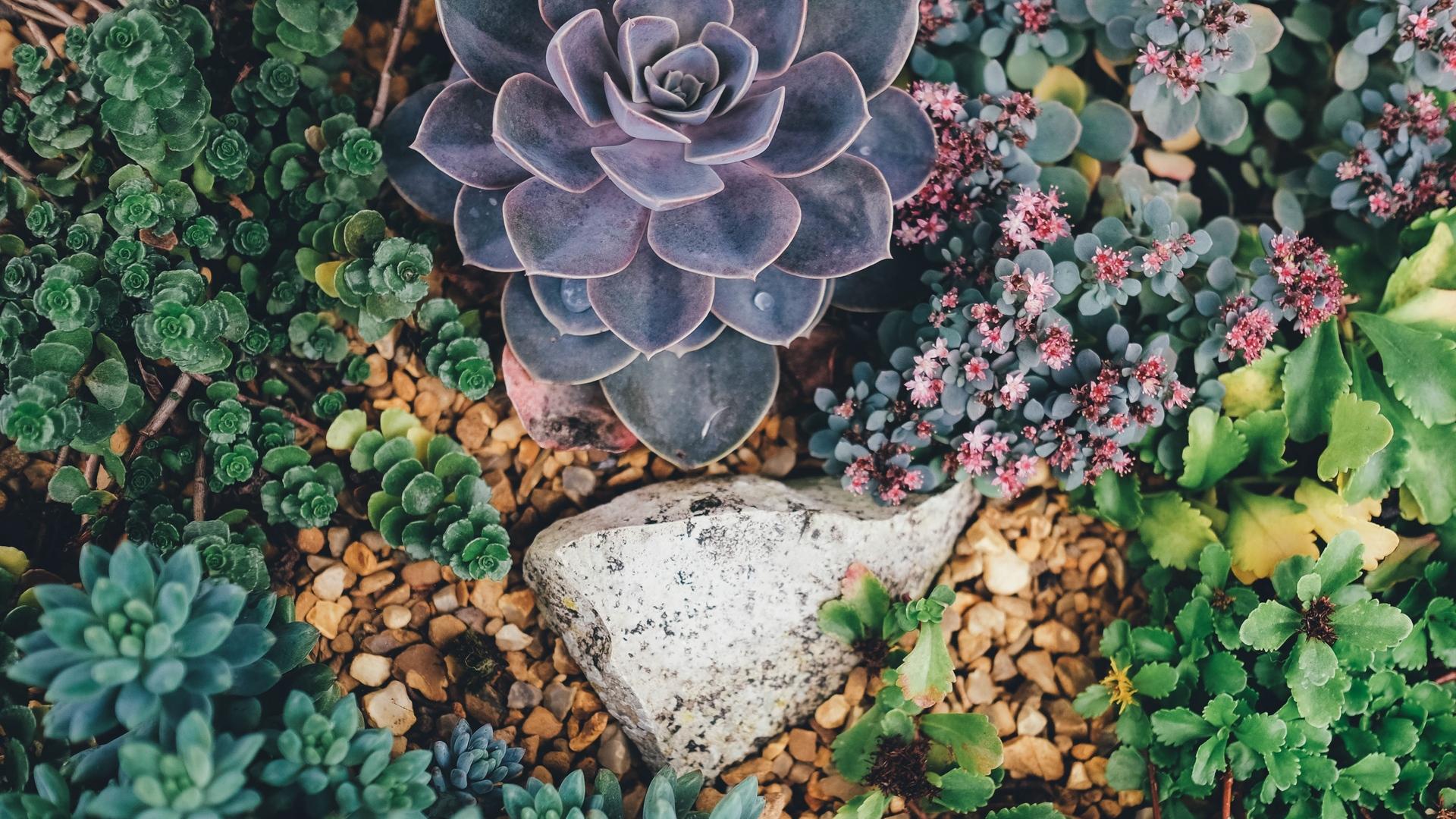 1920x1080 succulent flowers plant laptop full hd 1080p hd 4k