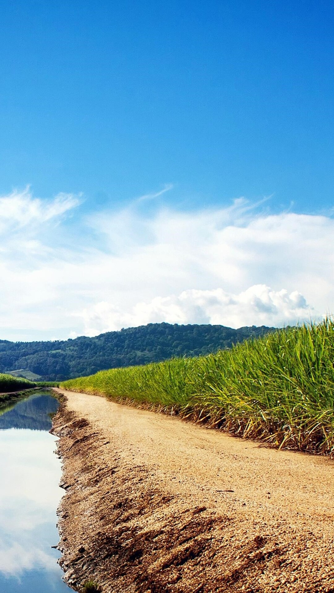 sugarcane-fields.jpg