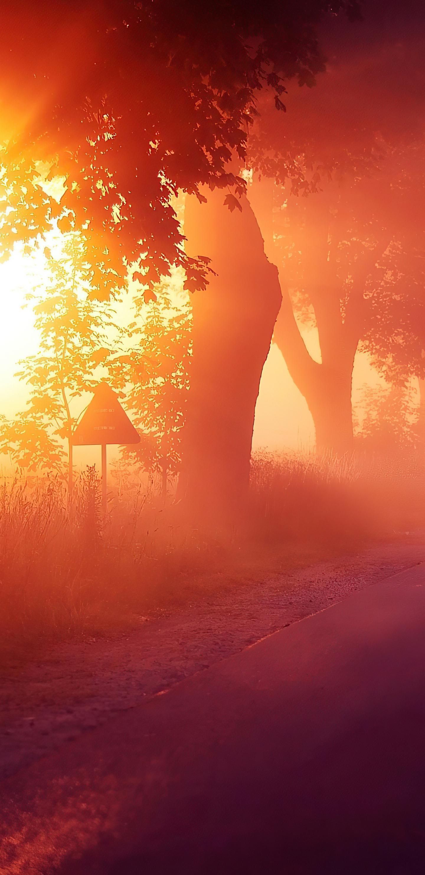sun-rays-mist-road-4k-xa.jpg
