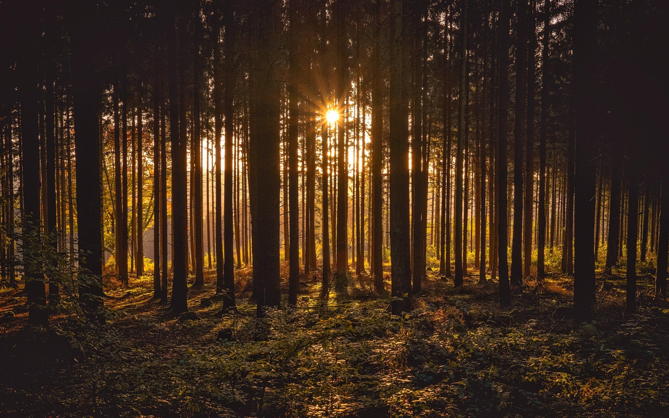 sunbeams-between-forest-trees-av.jpg
