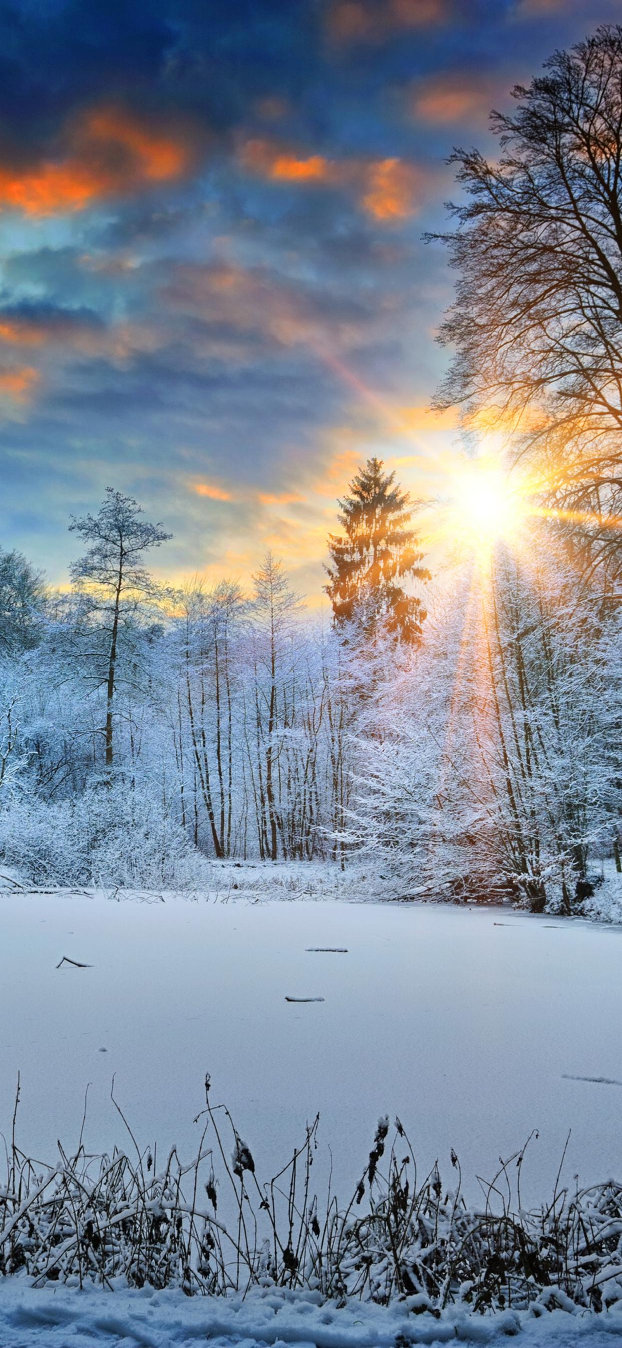 1242x2688 Sunbeams Landscape Snow In Winter Trees 4k Iphone Xs Max