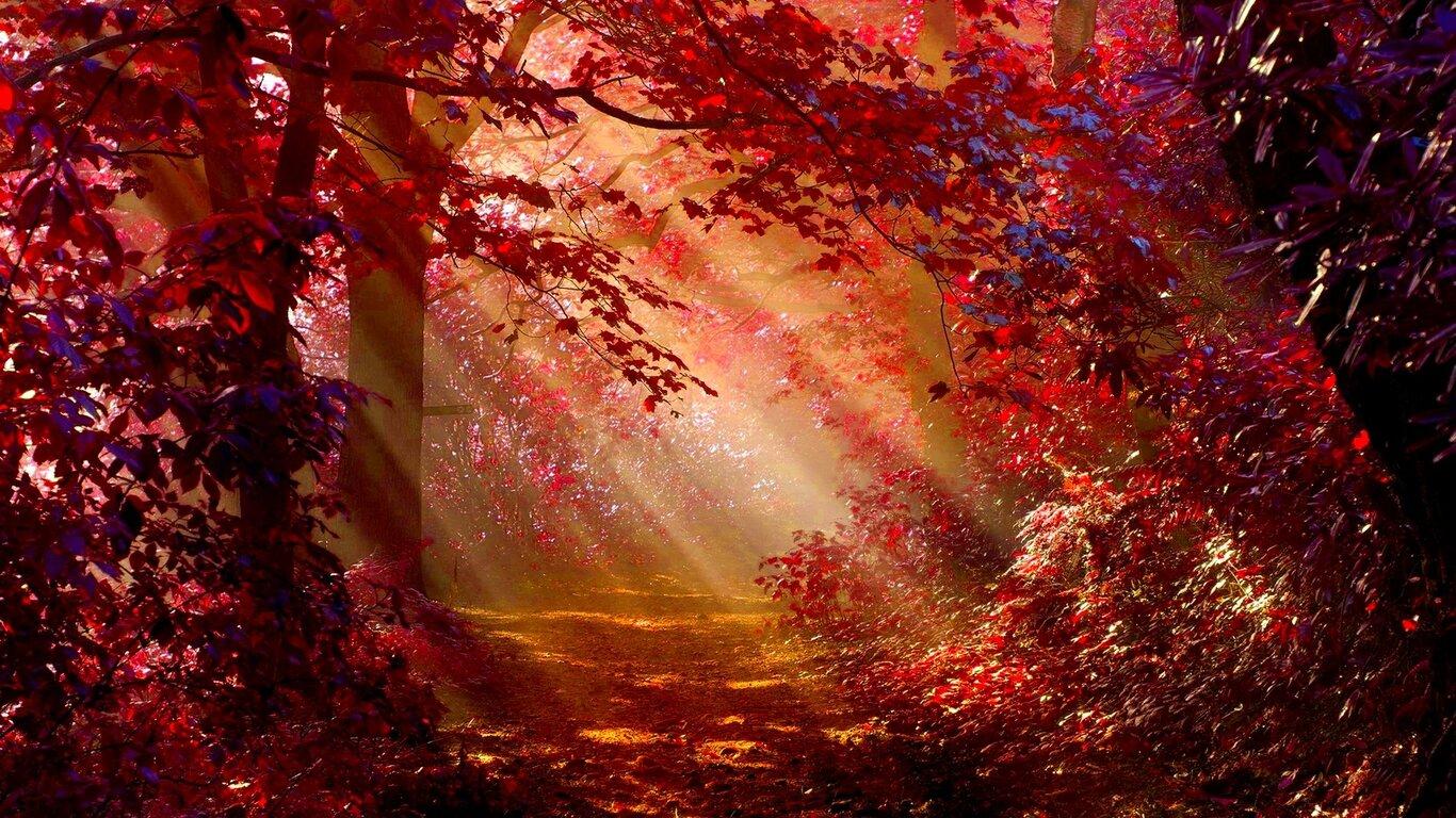 Sunlight In Autumn Forest Wallpaper