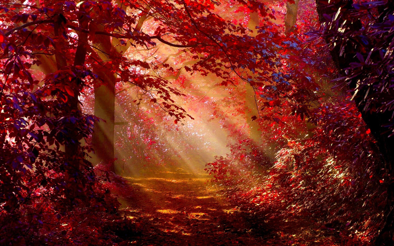 2880x1800 Sunlight In Autumn Forest Macbook Pro Retina HD