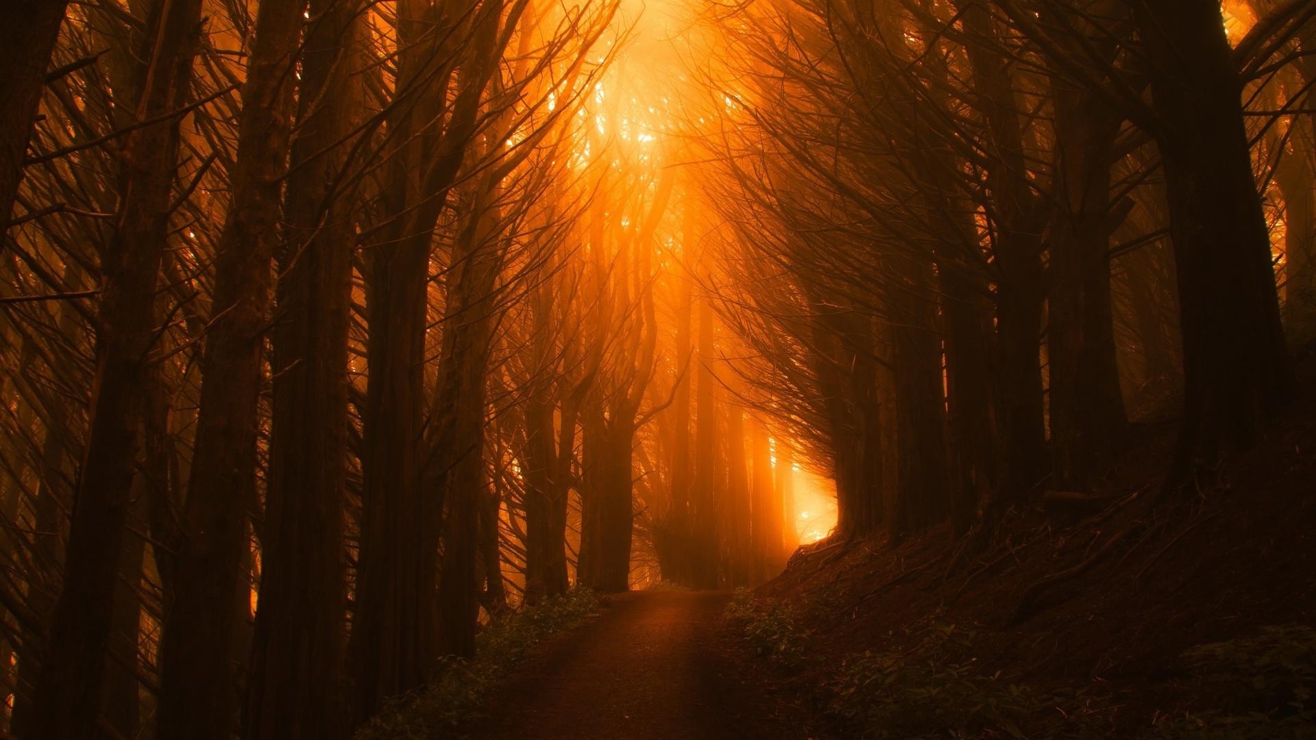 Sunlight Path Dark Beautiful Nature Trees 48