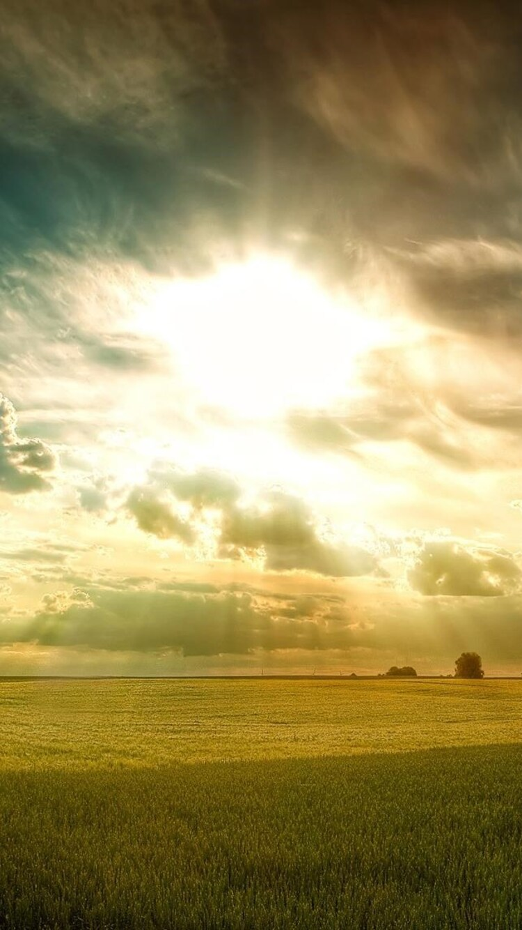 sunny-fields.jpg