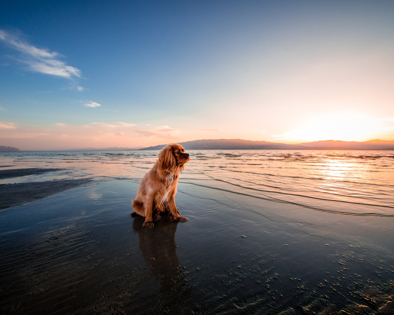 sunrise-dog-ocean-5k-vh.jpg