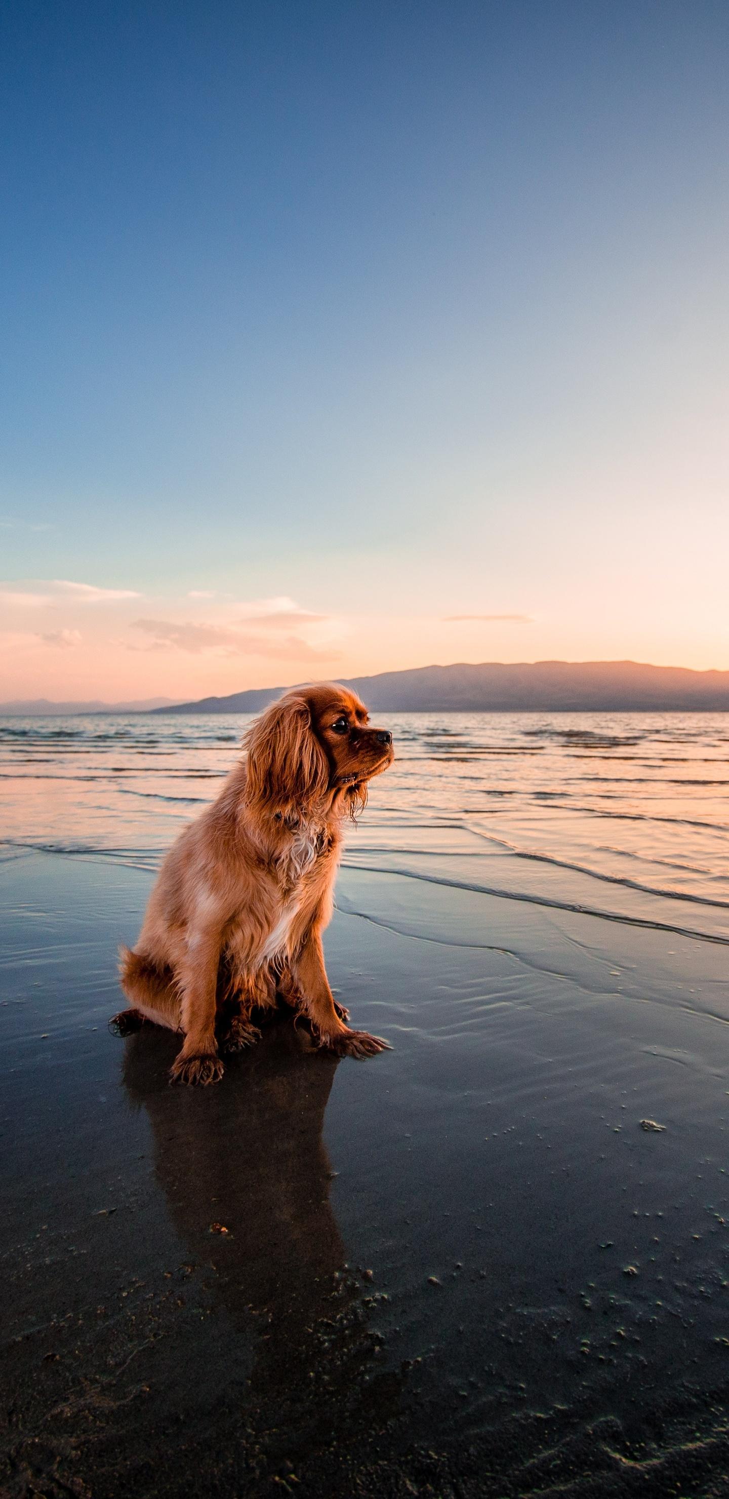 sunrise-dog-ocean-5k-vh.jpg