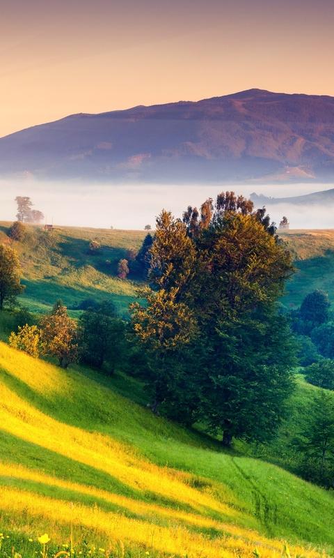 sunrises-and-sunsets-scenery-grass-hill-5k-pk.jpg