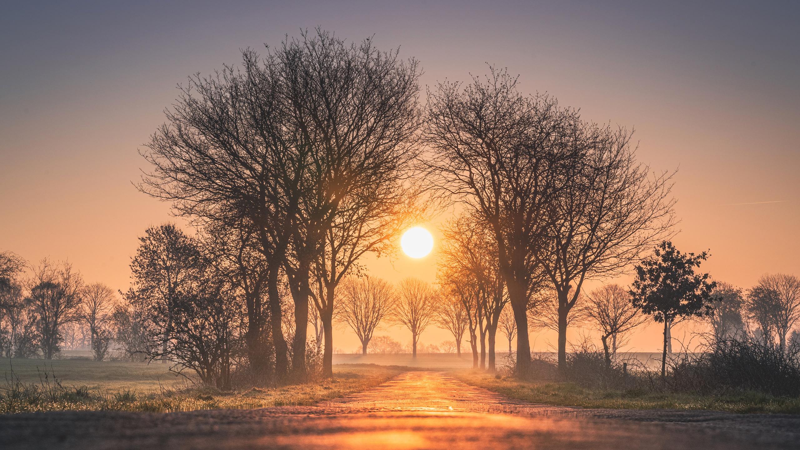 sunrises-and-sunsets-trees-sun-fog-4k-nw.jpg