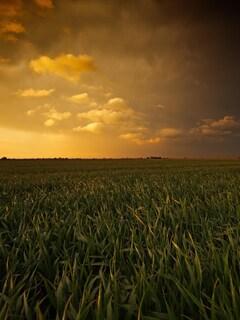 sunset-fields-wide.jpg