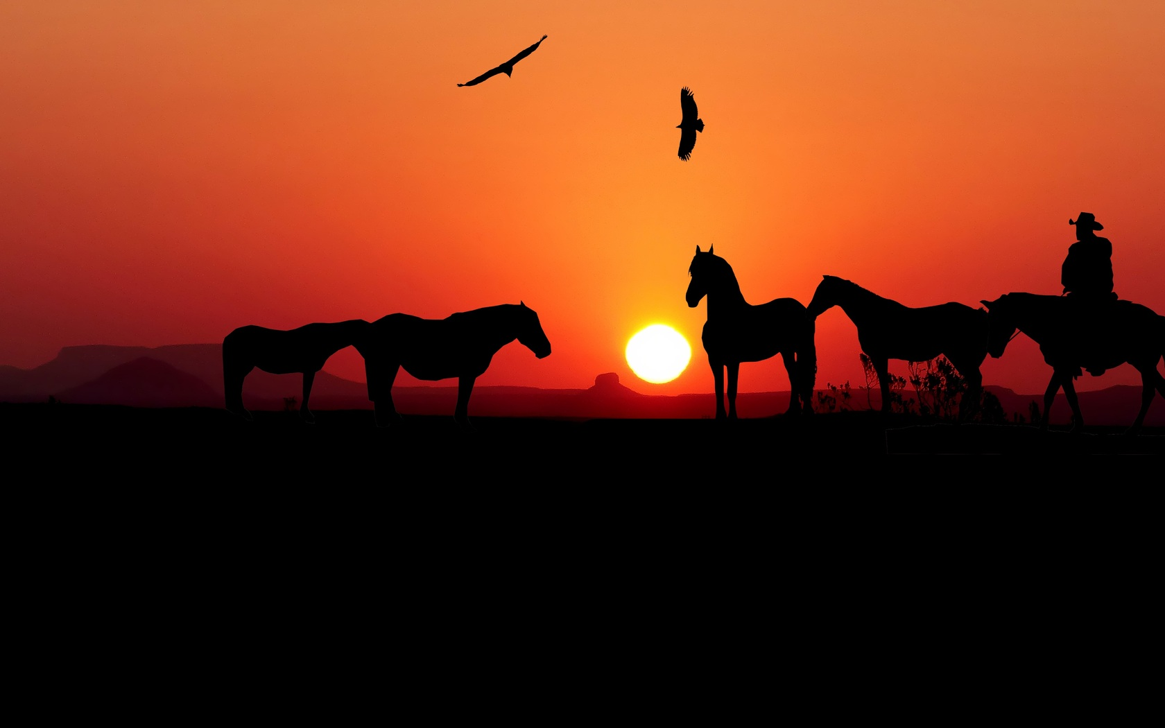 1680x1050 Sunset Horse Silhouette 4k 1680x1050 Resolution Hd 4k Wallpapers Images Backgrounds Photos And Pictures