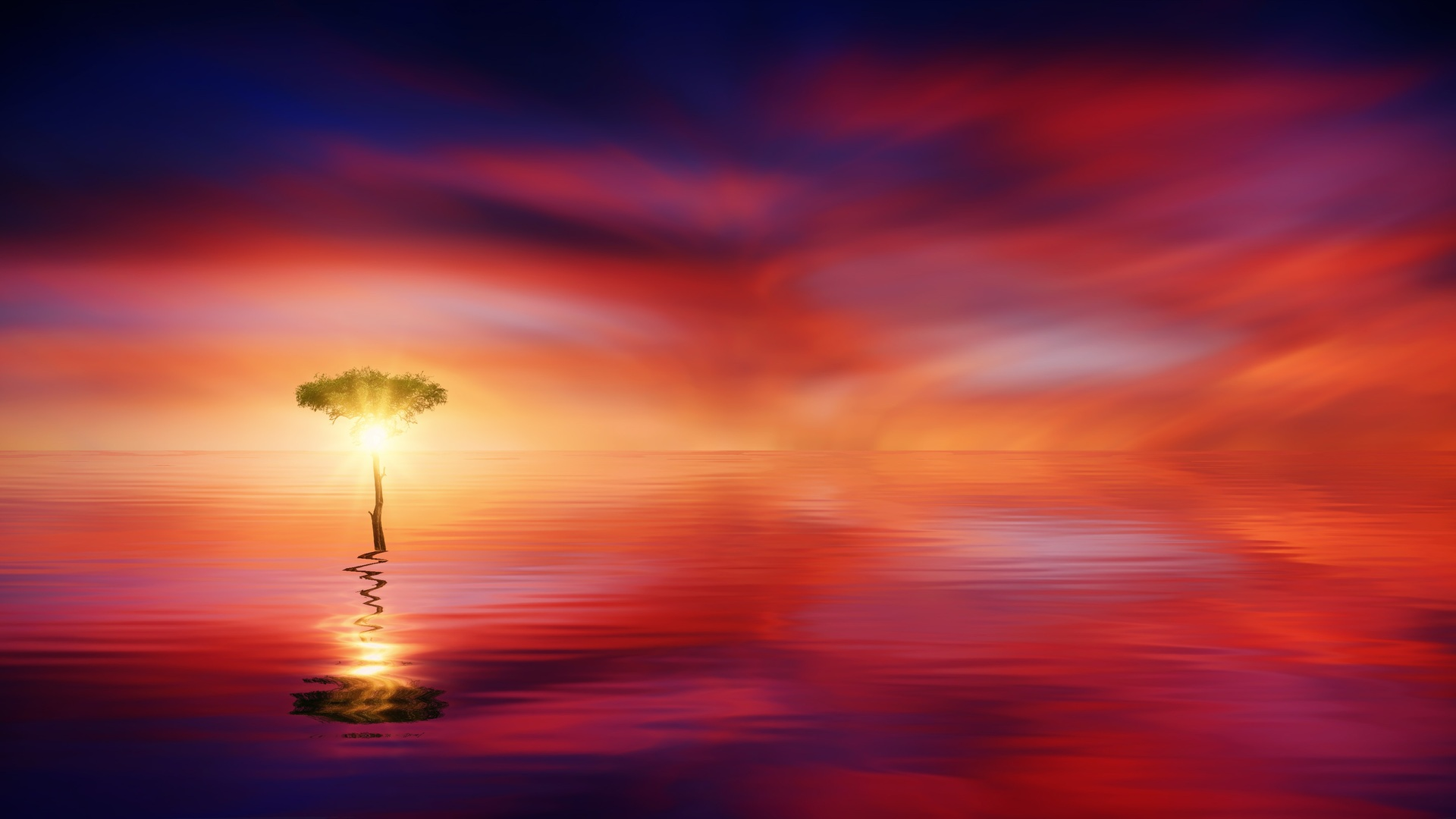 sunset-ocean-tree-sun-light-b7.jpg