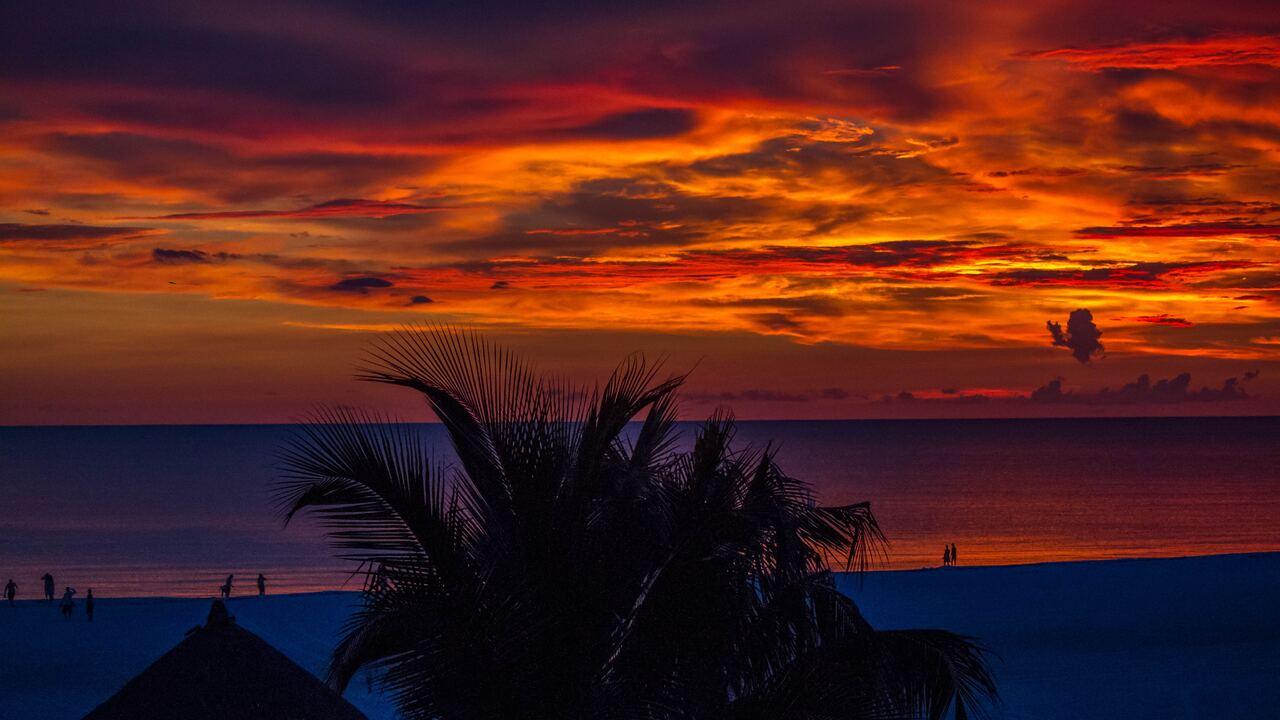 sunset-palm-trees-ocean-beautiful-view-4k-ni.jpg