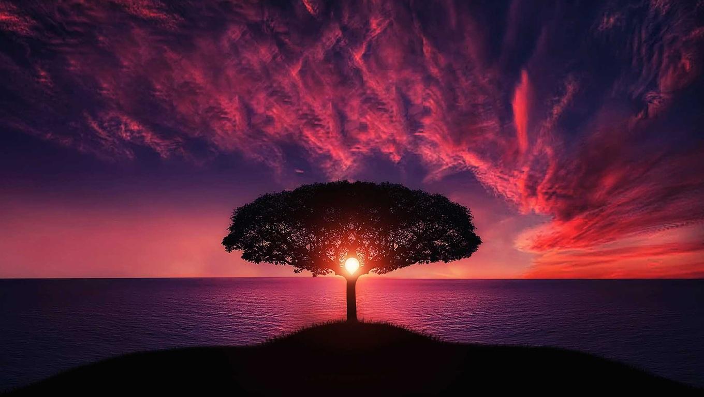 sunset-tree-red-ocean-sky-7w.jpg