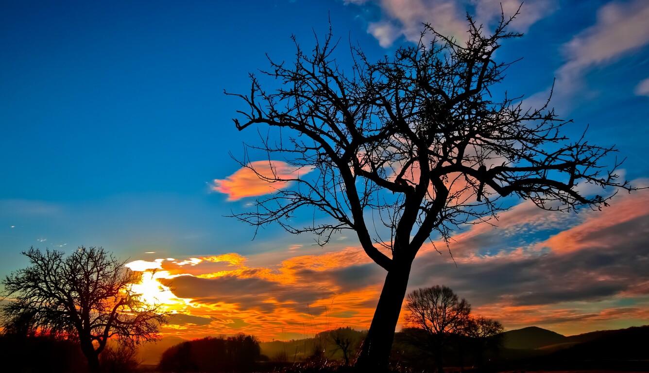 sunset-trees-sky.jpg
