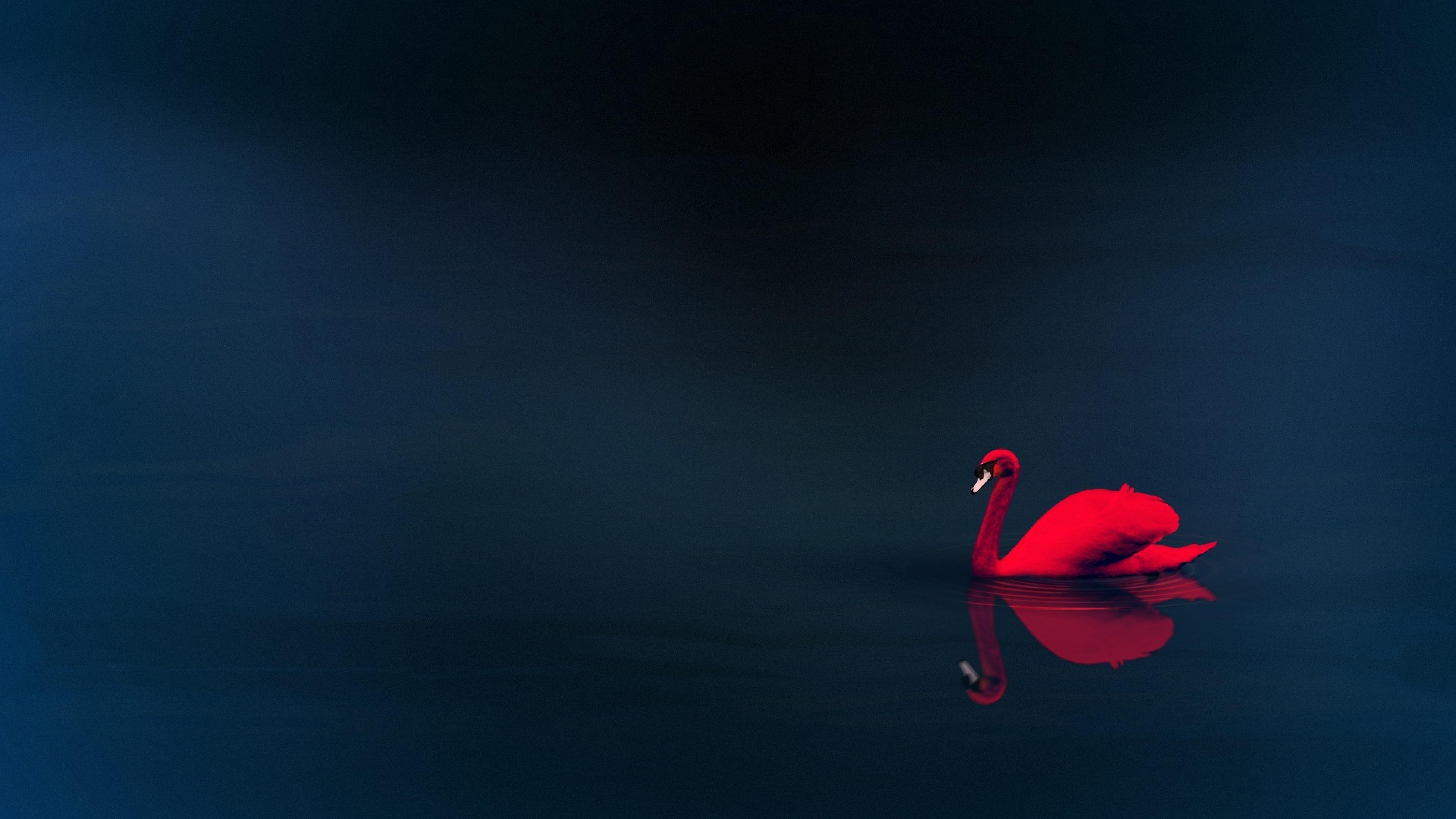 swan-4k-qu.jpg