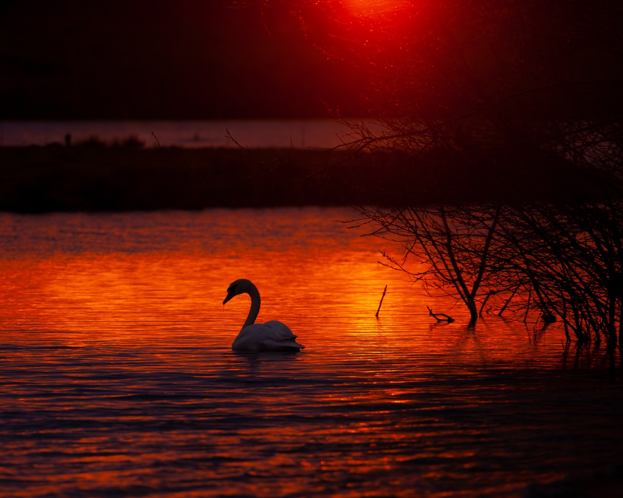 swan-bird-lake-5k-u0.jpg
