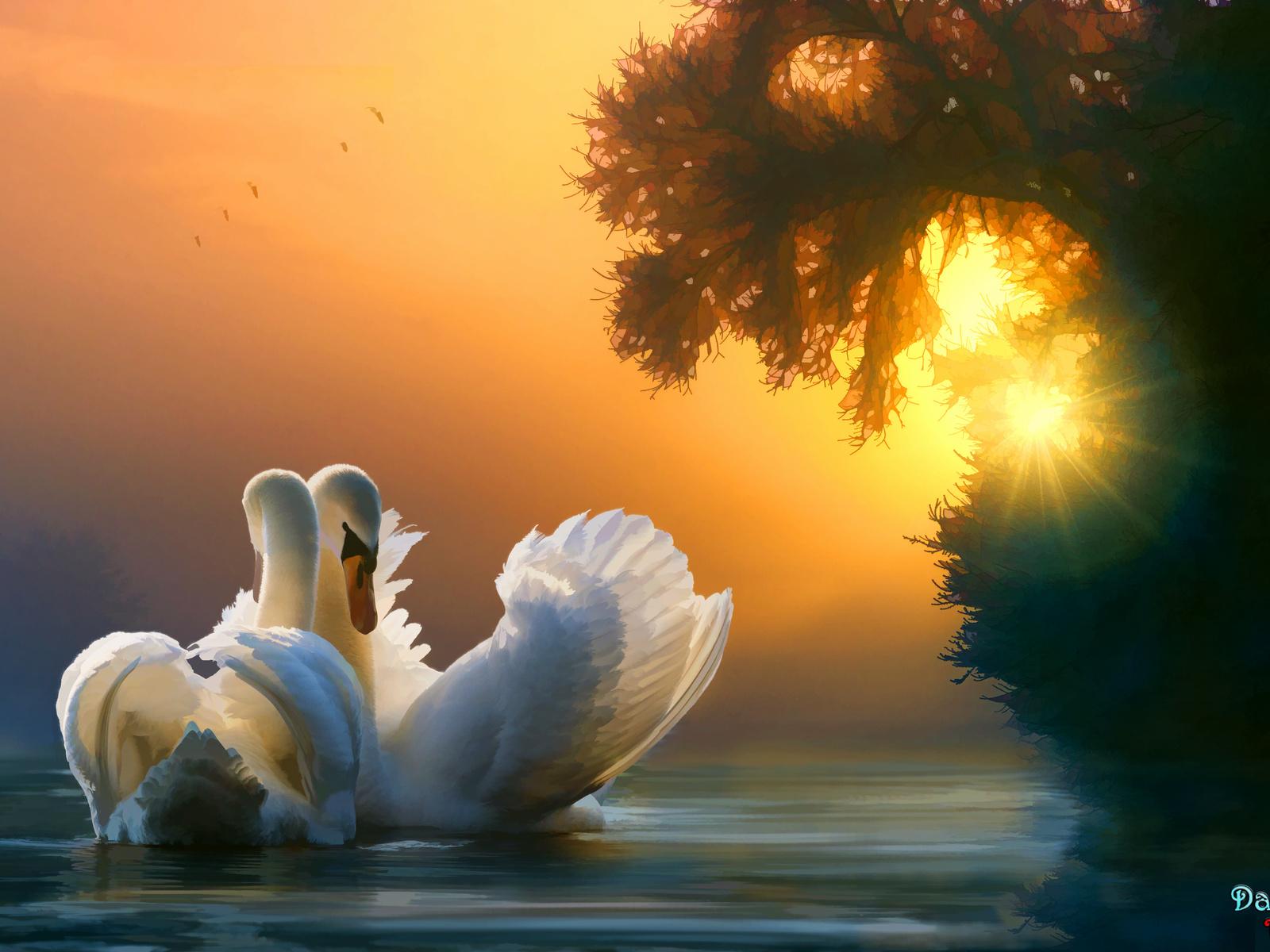 swan-couple-w2.jpg