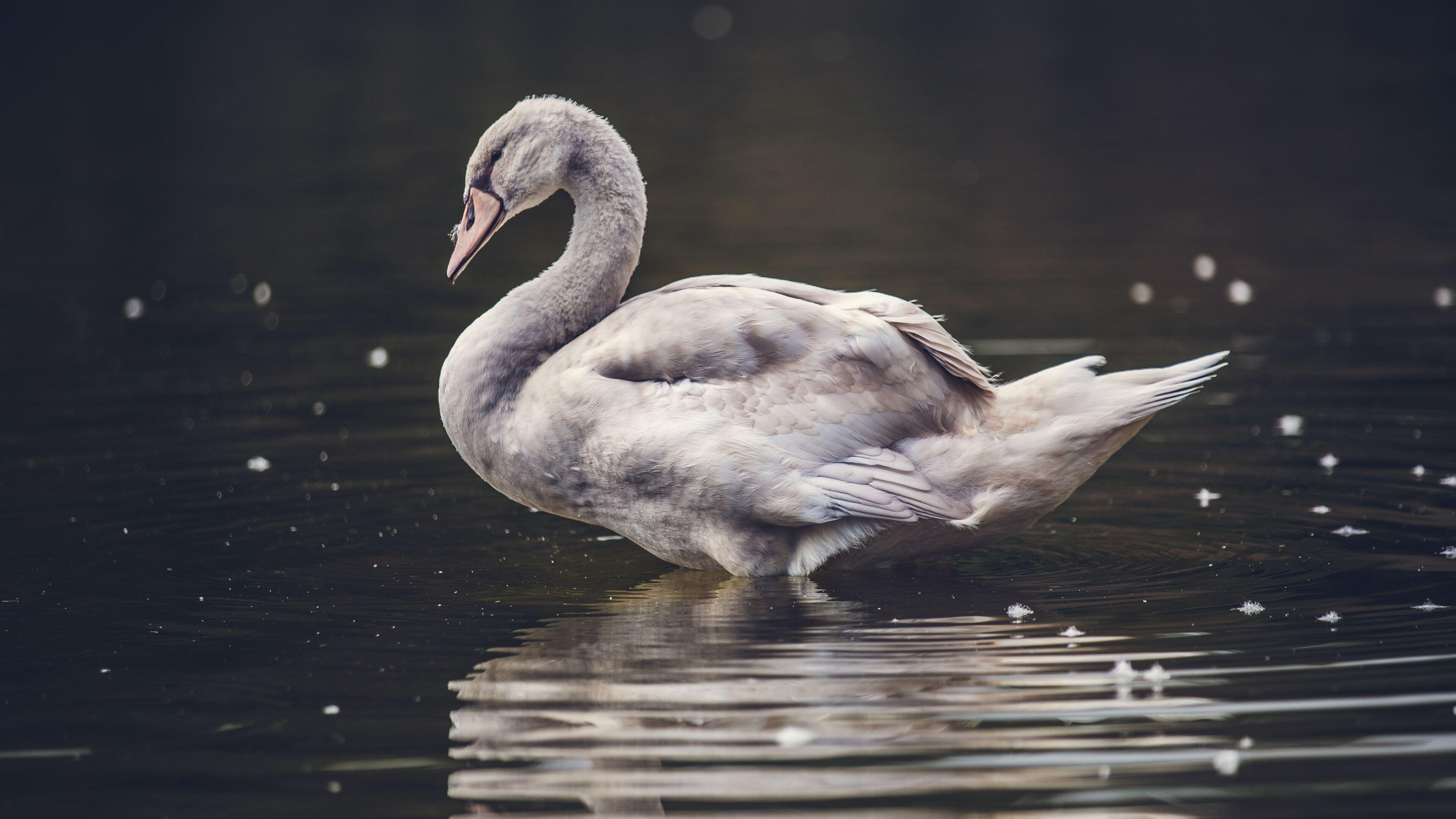 swan-lake-5k-de.jpg