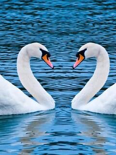 swan-love-birds.jpg