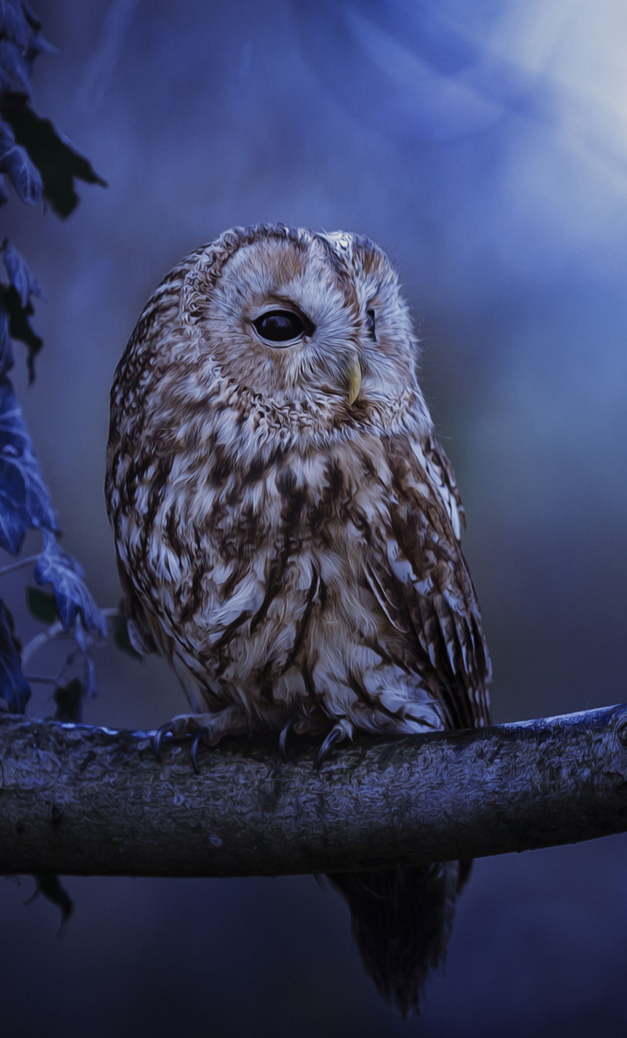 1280x2120 tawny owl in moonlight iphone 6 hd 4k wallpapers images