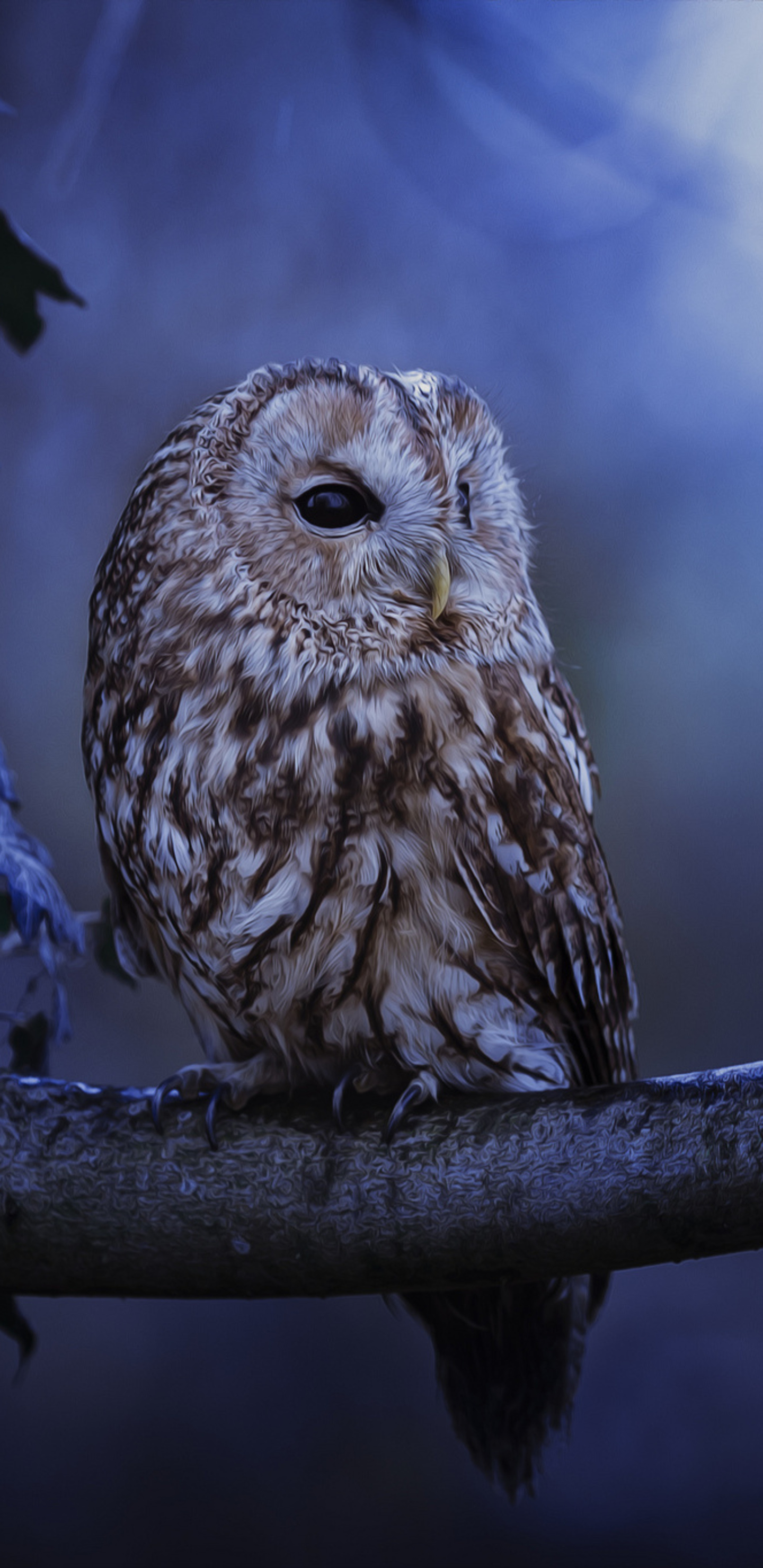 1440x2960 tawny owl in moonlight samsung galaxy note 98 s9s8s8