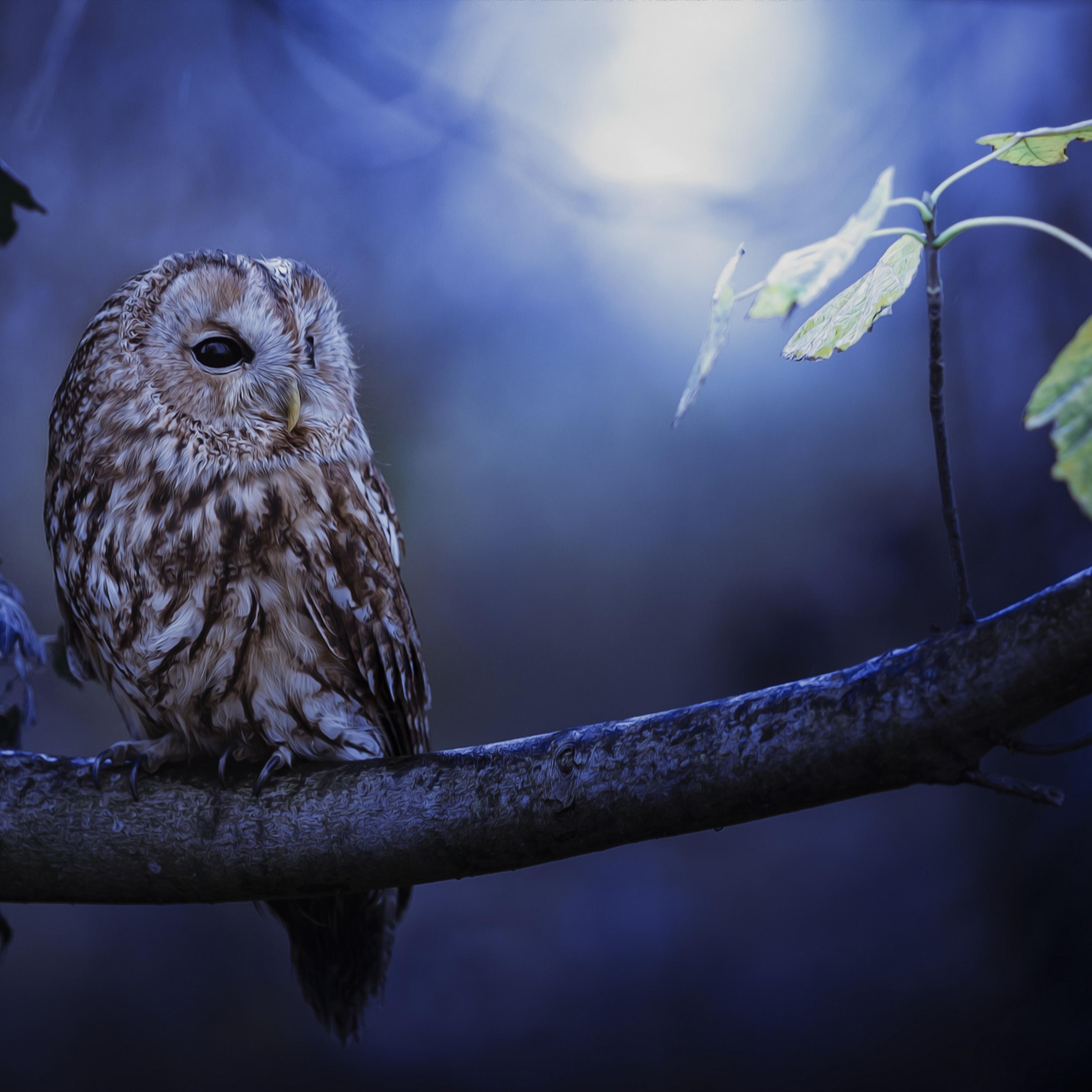 2932x2932 Tawny Owl In Moonlight Ipad Pro Retina Display HD 4k