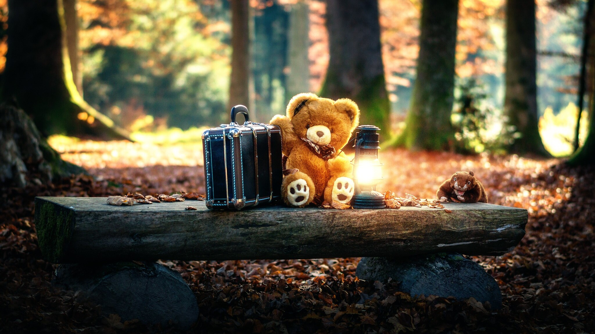2048x1152 Teddy Bears Cute Alone In Forest 2048x1152