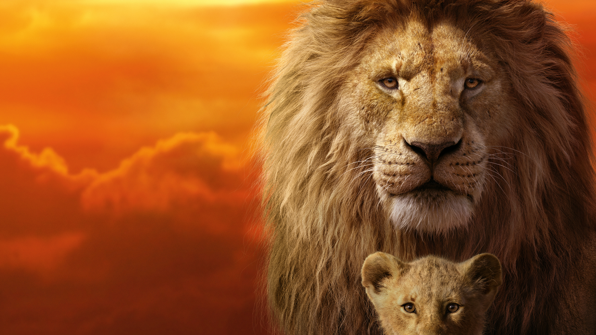 Trends For Lion Images Hd 1080p Wallpaper Download Wallpaper