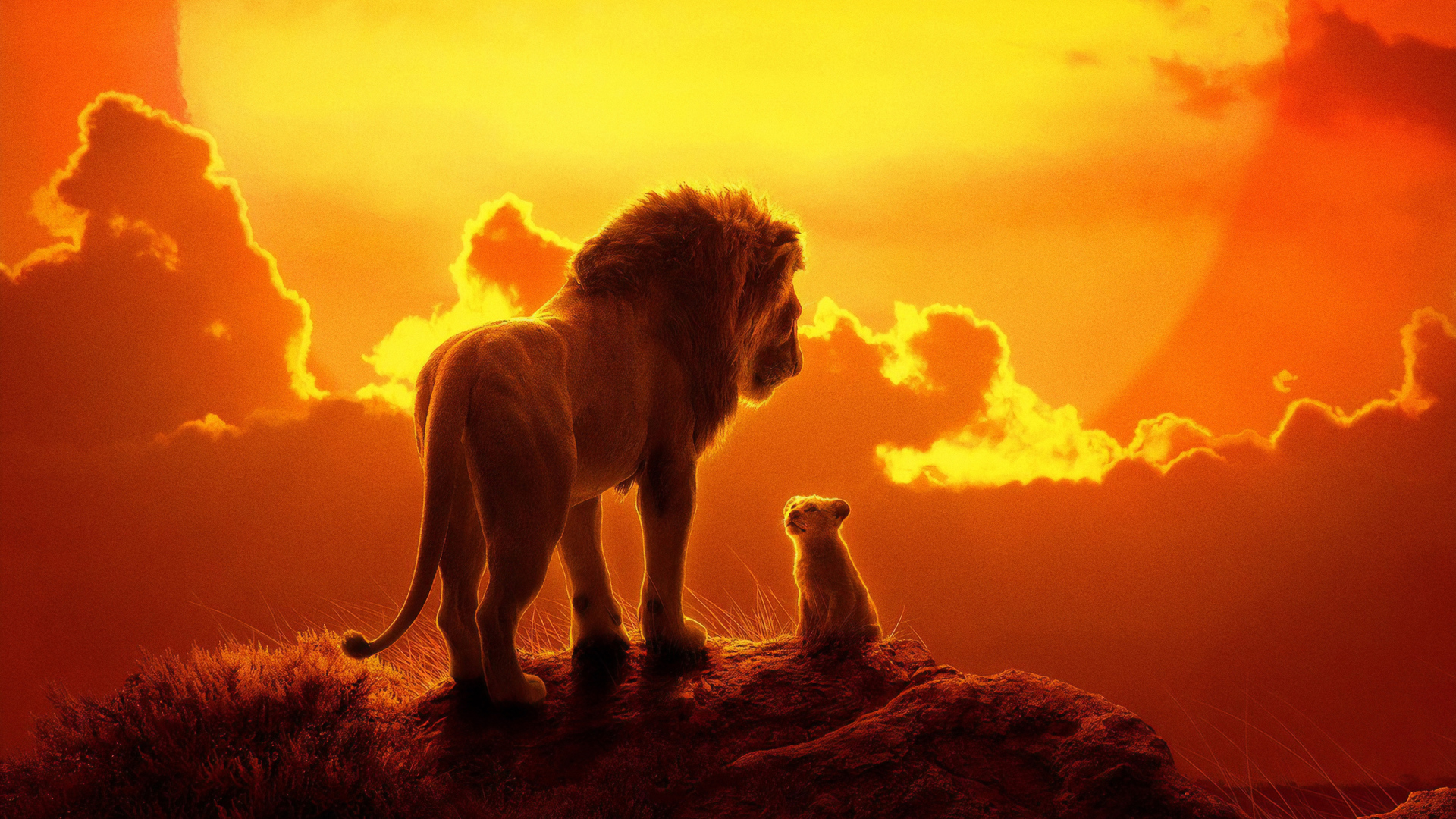 Lion king hd wallpapers 1080p | HD Wallpapers Lion Group (86+)  2019