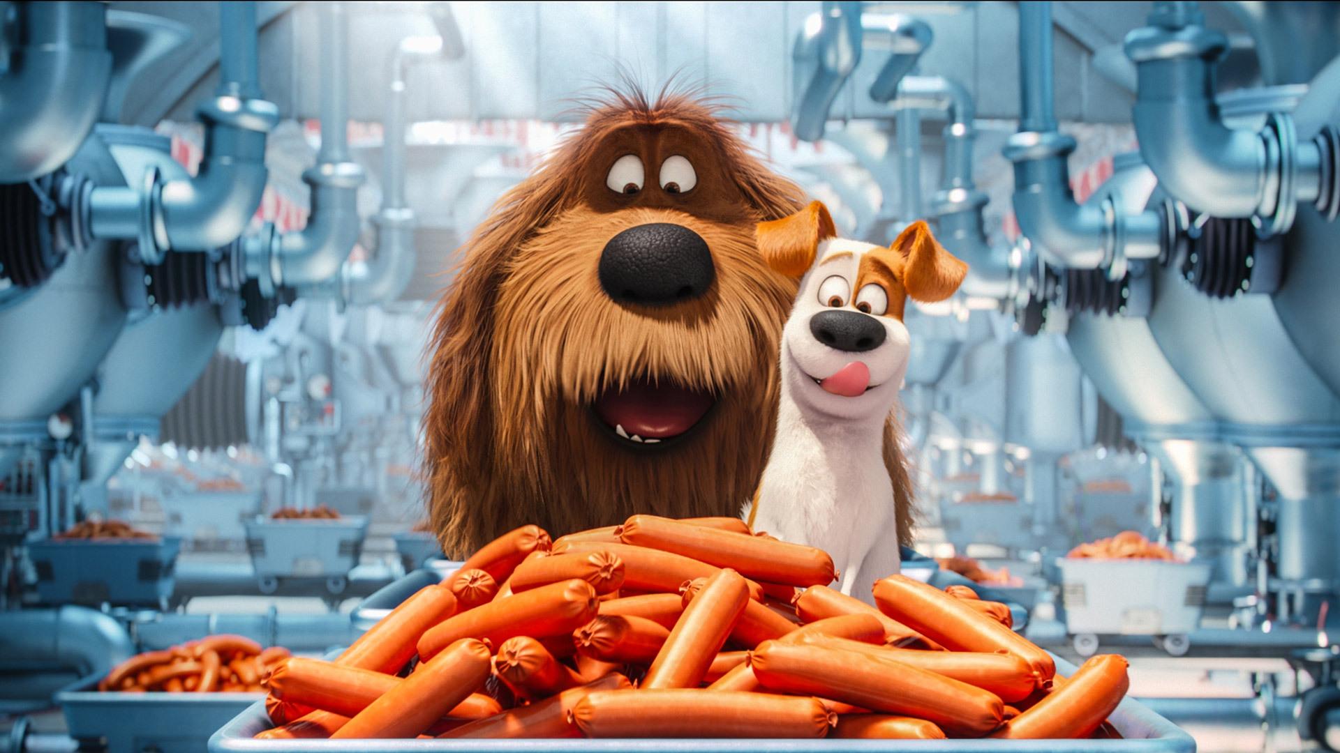 the-secrete-life-of-pets-animated-movie-on.jpg