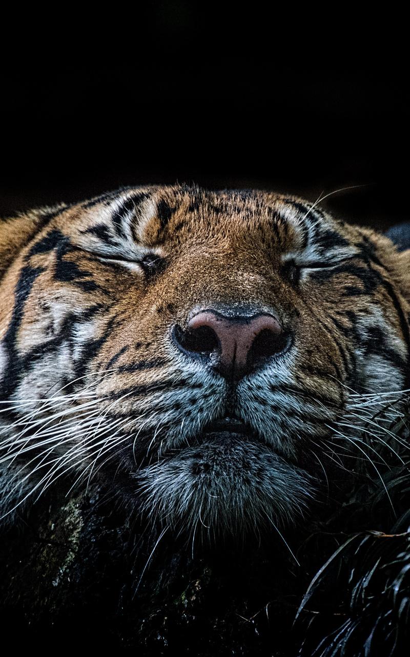 tiger-5k-rr.jpg