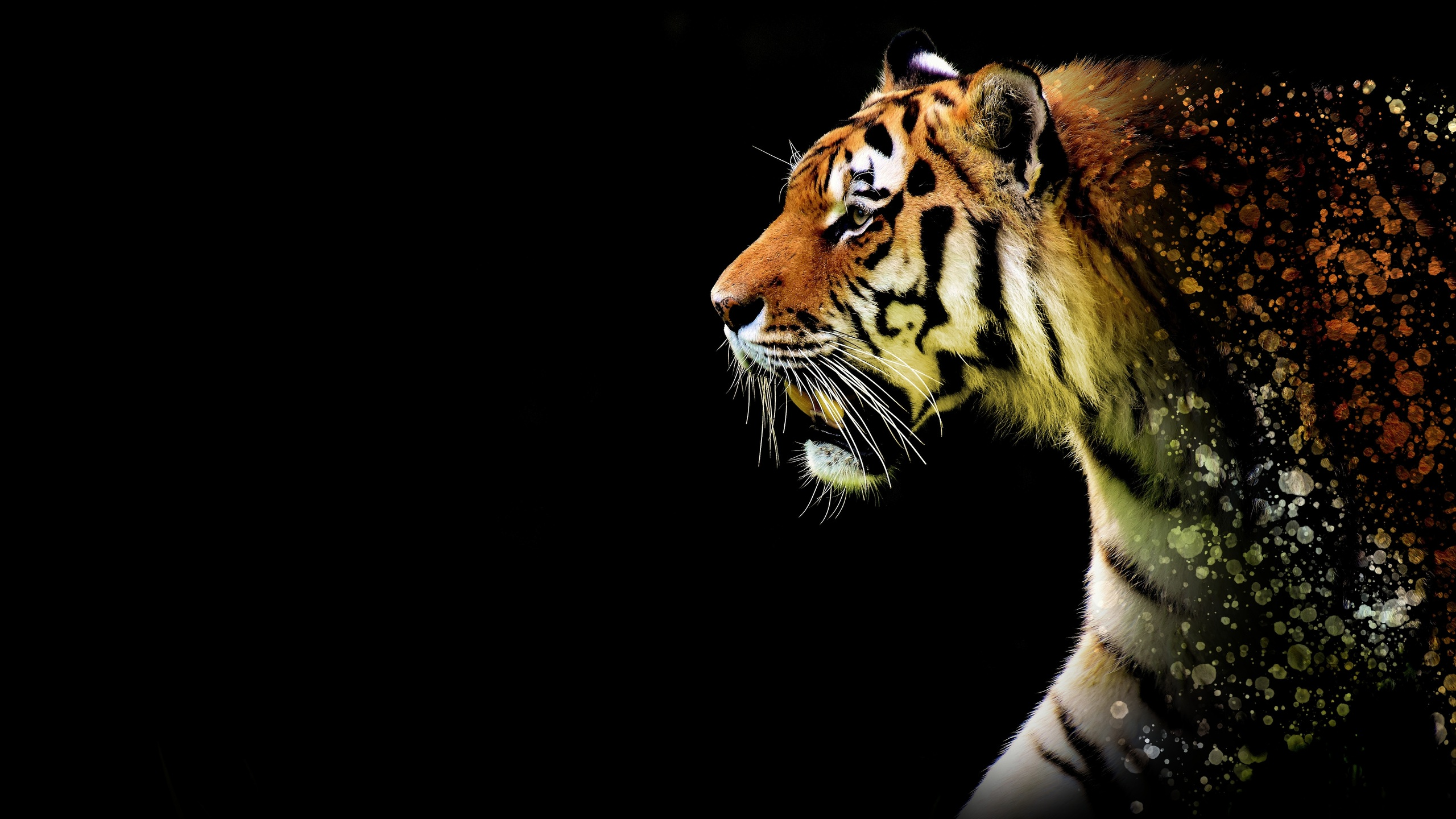 2560x1440 Tiger Abstract 5k 1440p Resolution Hd 4k Wallpapers