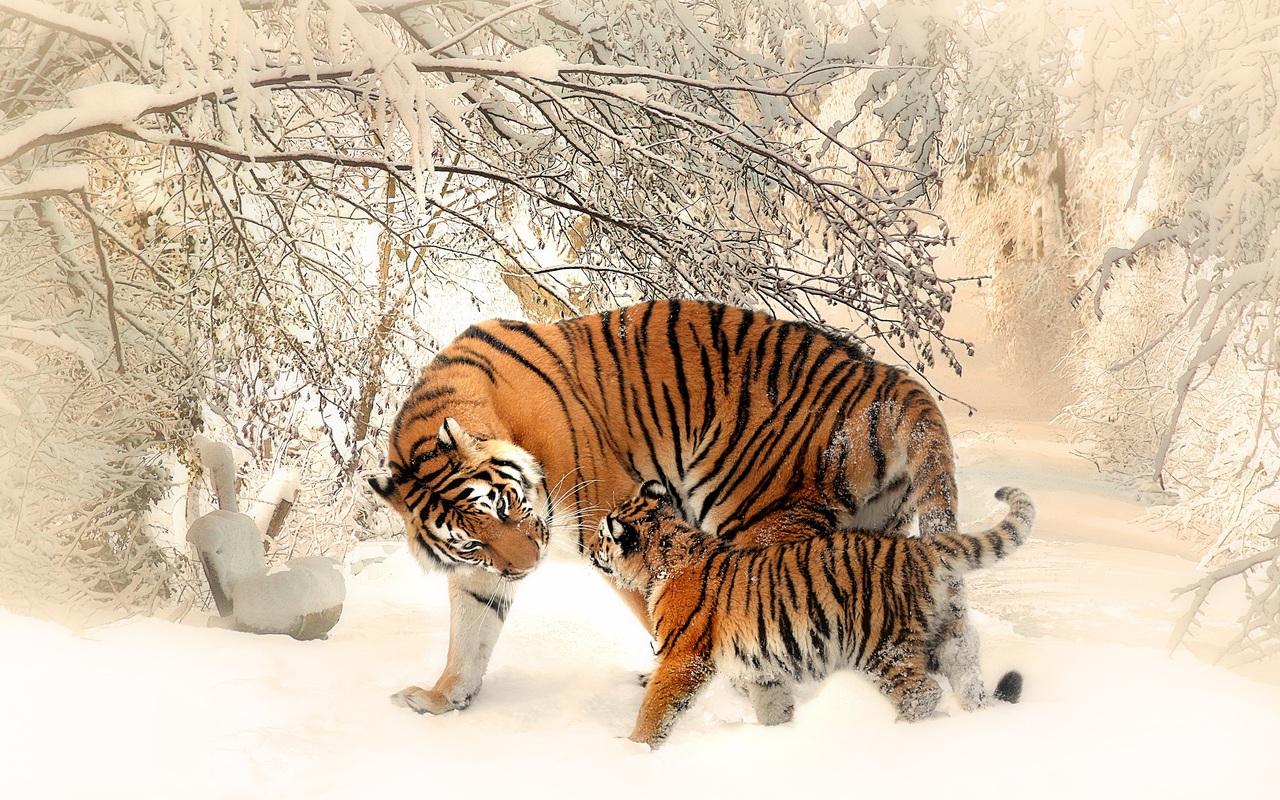 tiger-baby-felidaee-p8.jpg