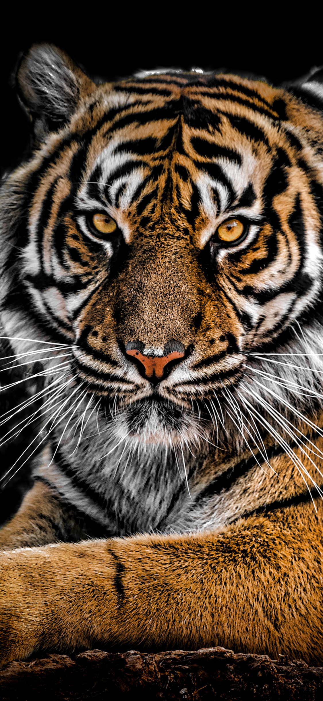 1125x2436 Tiger Closeup Iphone XS,Iphone 10,Iphone X HD 4k