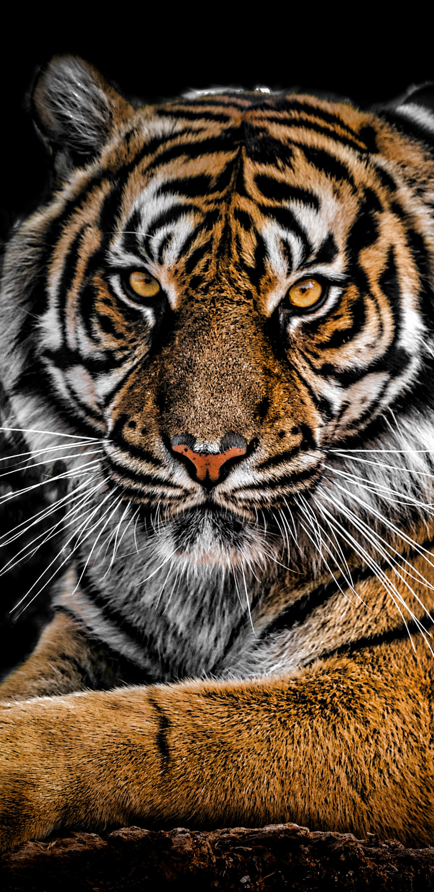 1440x2960 tiger closeup samsung galaxy note 9 8 s9 s8 s8 - Samsung s9 wallpaper 4k ...