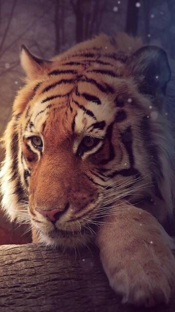 tiger-dreamy-art-4k.jpg