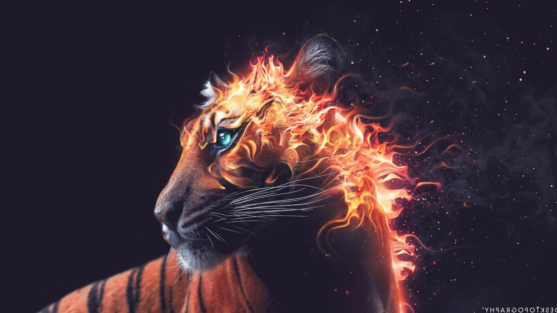 tiger-fire-graphics.jpg