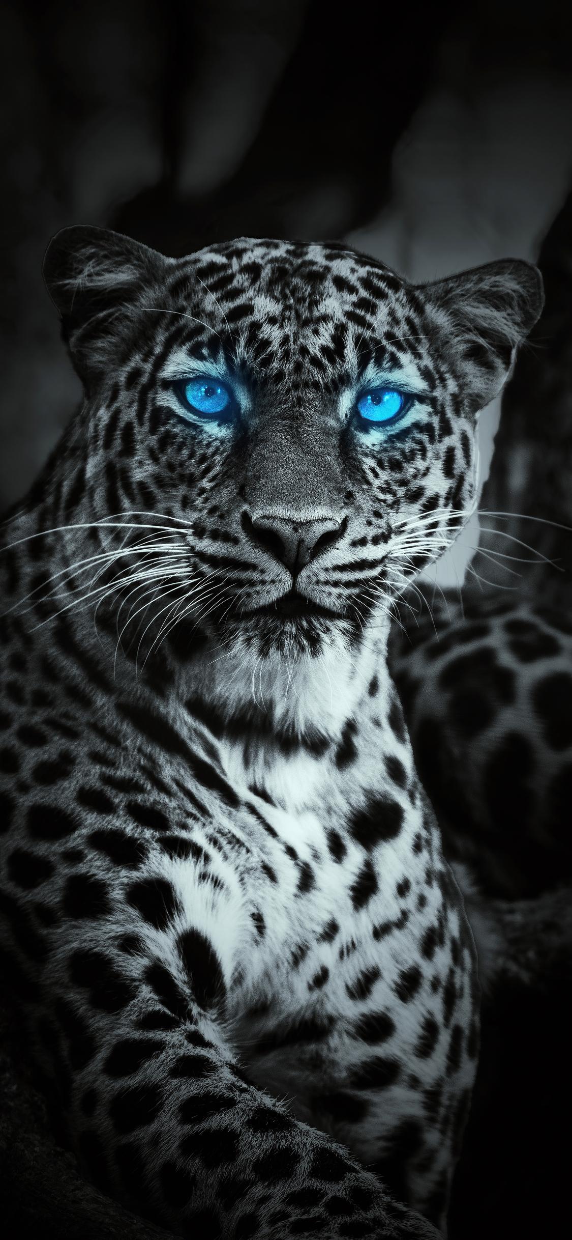 tiger-glowing-blue-eyes-w9.jpg