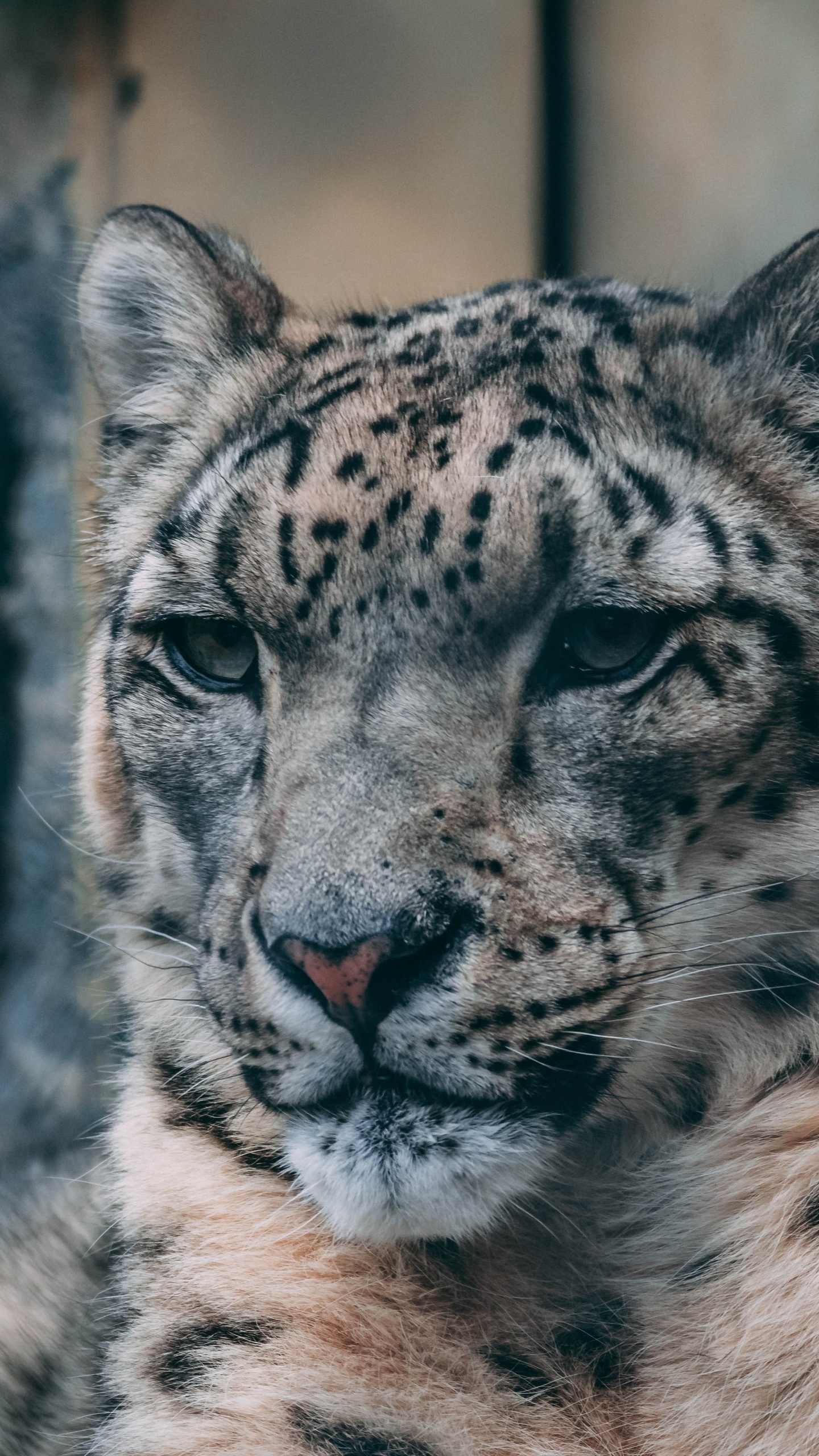 tiger-starring-5k-oq.jpg
