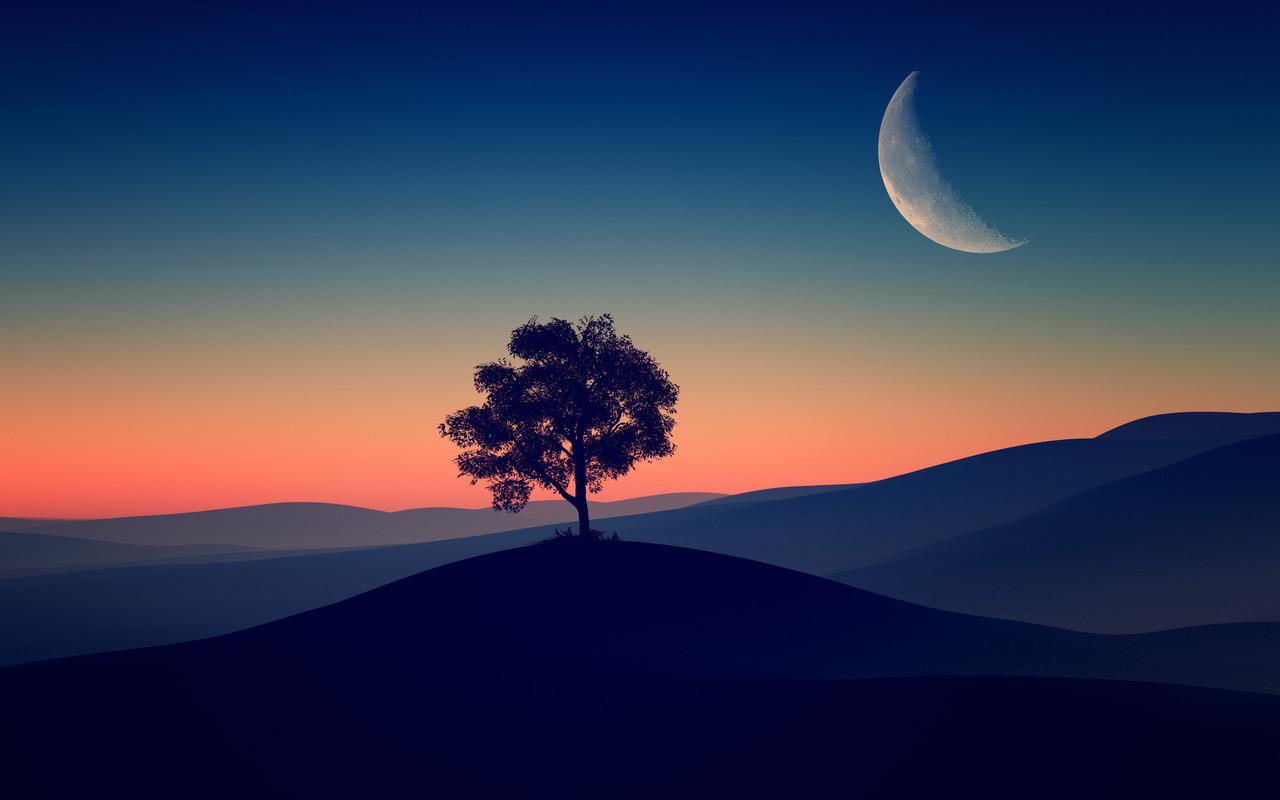 1280x800 Tree Alone Dark Evening 4k 720P HD 4k Wallpapers ...