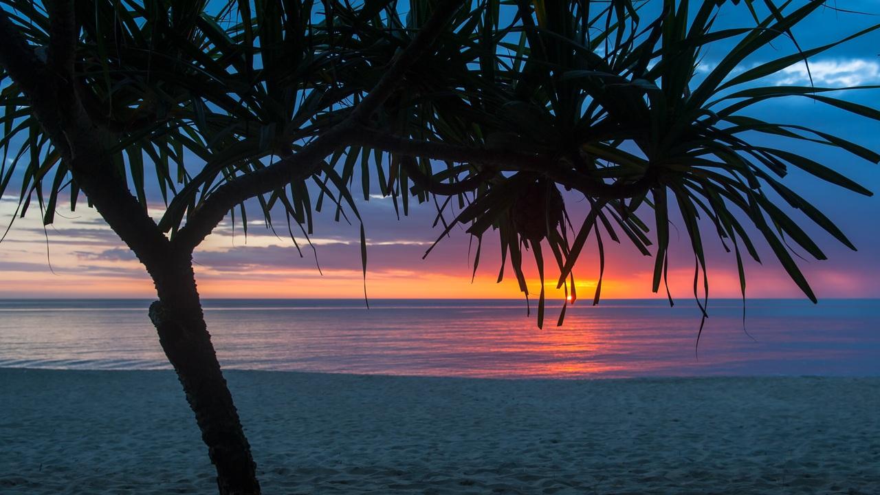tree-beach-seashore-summer-r1.jpg